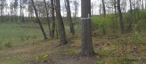 Erdészeti határmérés